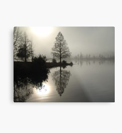Cypress in the Fog  Metal Print