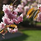 Pink Blossom Time by John Dalkin