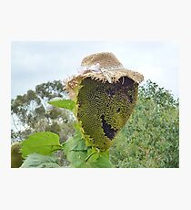 The Happy Flowerdale Sunflower Photographic Print