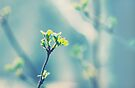 First signs of spring... by smilyjay