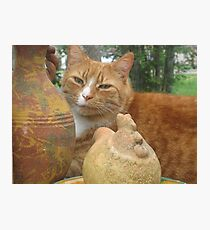 Spring Time Cat Photographic Print