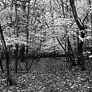 Fall Grey by Adam Kuehl