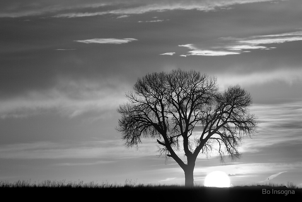 Sunrise Silhouette Black and White by Bo Insogna