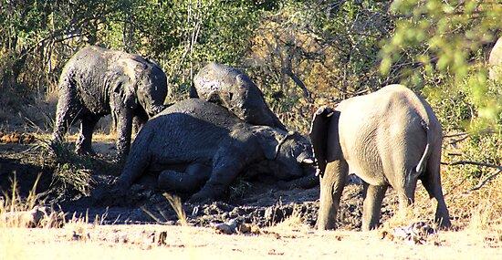 elephant mud bath by Greg Parfitt