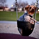 Yorkshire Terrier  by sodaniechea