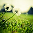 Spring is Near by sodaniechea