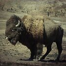 where the buffalo roam by Loretta Marvin