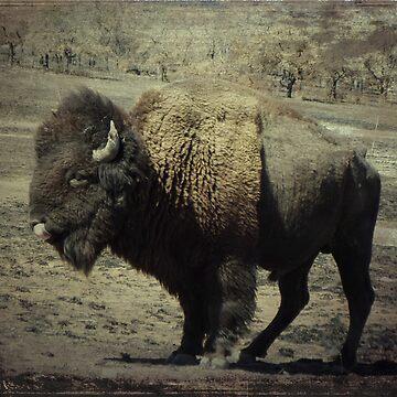 where the buffalo roam by letterchan