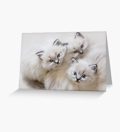 Baby Faces Greeting Card