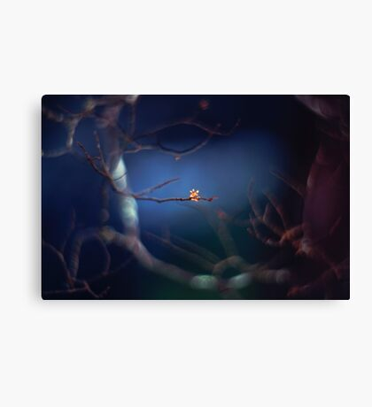 The mysterious little bud Canvas Print
