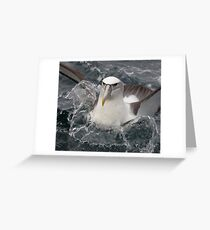 Buller's Albatross Greeting Card