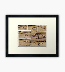 Kangaroos  Hopping Framed Print