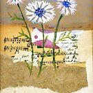 Centaurea by Sorana Tarmu