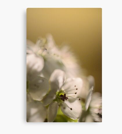 Flower at night 2 Canvas Print