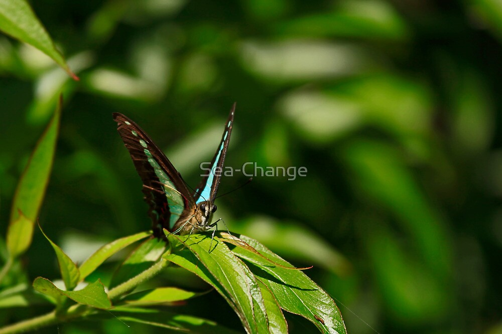 My Elusive Butterfly by Sea-Change