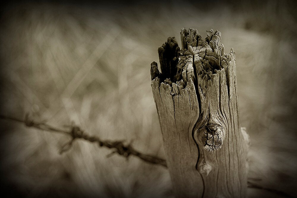 Fence Post by Michael Griscavage