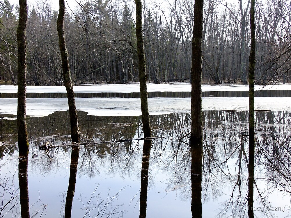 Eels Creek Reflections- Early Spring 2012. by Tracy Wazny