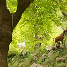 Snack - The Taurean mountains - Turkey by Claire Haslope