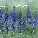 Card - Happy Birthday by jules572