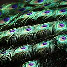 Peacock Feathers by Paulette1021