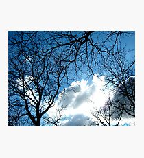 Branches with sky, New York City  Photographic Print