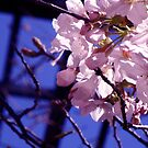 buds into blossoms by califpoppy1621
