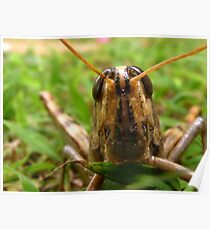 Happy Hawaiian Grass Hopper Poster