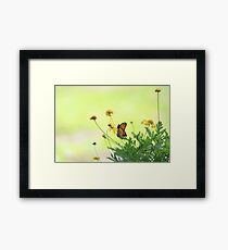 Monarch In the Spring Framed Print