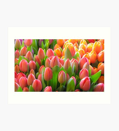 not another tulip shot ... Art Print