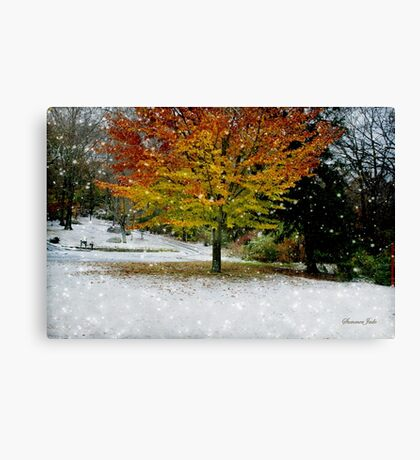 Beech Tree ~ Caught in a Snow Flurry Canvas Print