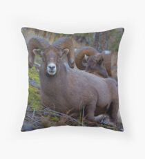 Kootenay Ram Throw Pillow