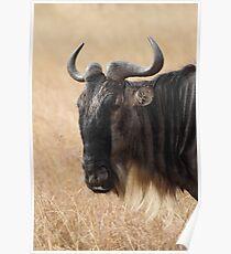 Wildebeest Portrait #2 Poster