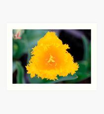 Frilled to see you Tulip Art Print