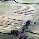 Strip Farming by Paul  Green