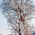 Tree Full of Snow by Vicki Field
