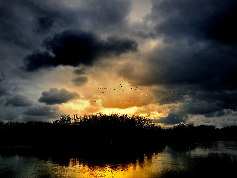Just A Bit Of Light by Charles & Patricia   Harkins ~ Picture Oregon