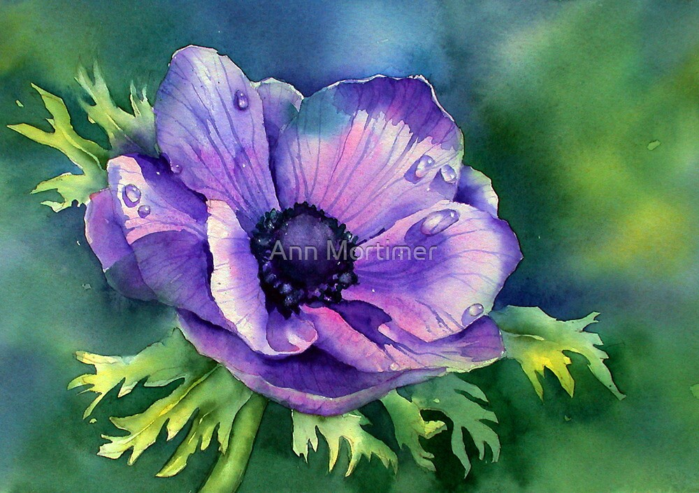 Quot Purple Anemone Quot By Ann Mortimer Redbubble