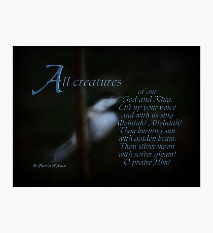 All Creatures Photographic Print