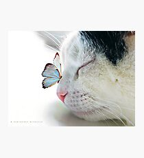 BUTTERFLY SAT ON A SLEEPING CAT NOSE  Photographic Print