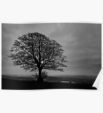 Night time lone tree Poster