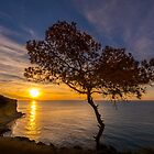 Lone tree greets the sunrise by Ralph Goldsmith
