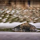 Ripples in the Sand by Peter Hammer