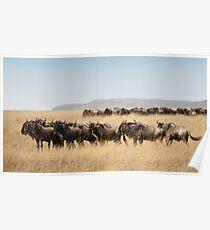 Some Members of the Wildebeest Migration, Maasai Mara, Kenya Poster