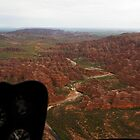 Bungles from the air by georgieboy98