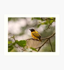 Village Weaver Art Print