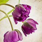 French Tulips by Henrietta Hassinen