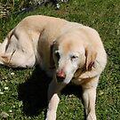 my dog Jarman by lettie1957
