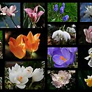 Spring Collage by AnnDixon