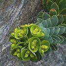 Green flowers by elasita