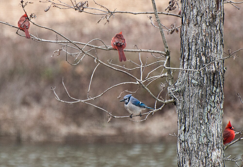 Hey Guys! Did you know there is a Jay bird in the tree with us?? by barnsis